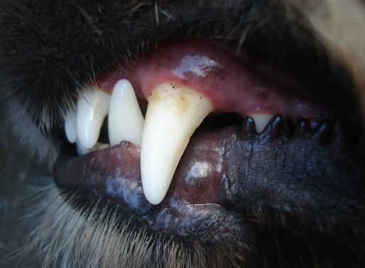 Hund biss 69-Jährige ins Gesicht