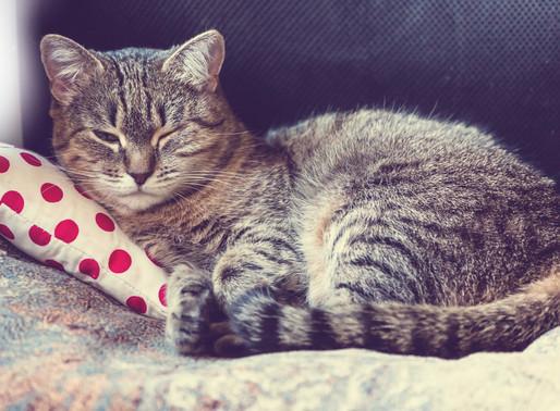 Kopfgeld auf Katzen-Killer aus Burgenland