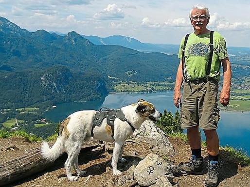 Bergdrama mit Happy-End: Timmi lebt