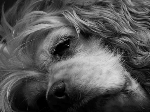 Epilepsie beim Haustier