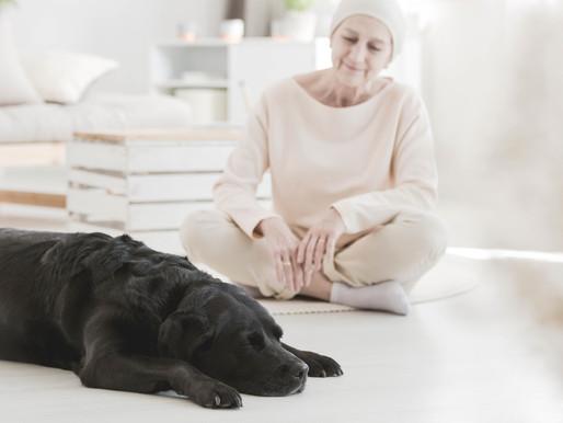 Tiere sind keine Beschäftigungstherapie