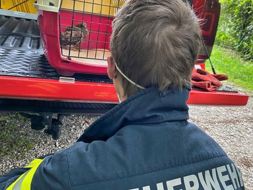 Tierrettung: Feuerwehr rettet Turmfalke