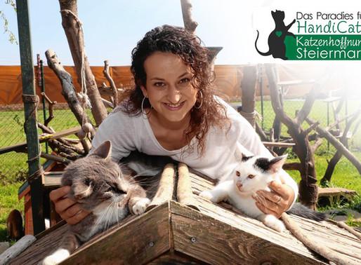 Katzenhoffnung Steiermark - das Paradies für Handicats