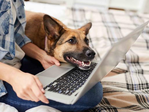 Online-Kurs für Sachkundenachweis bei Hundekauf