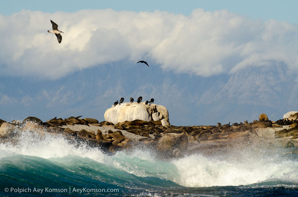 Seal's island at Simon's town, South Africa