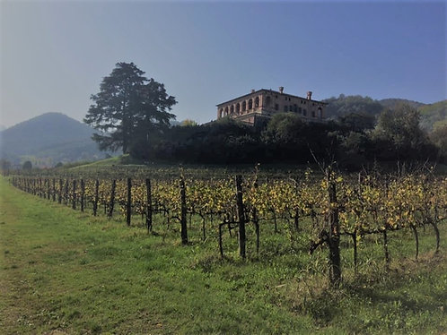 Glorious Italian Wines - Virtual Wine Tasting