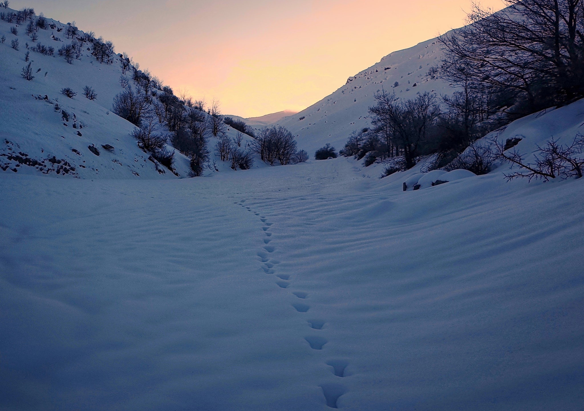 Beautiful fresh tracks in the snow in north of Israel