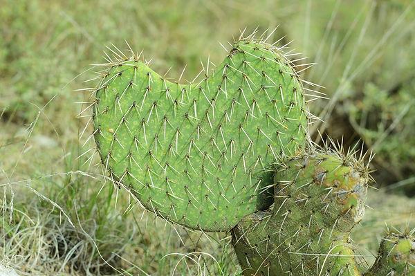 cactus-3613809_1920.jpg