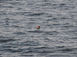 A Friendly Seal