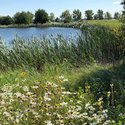 Pickle Pond