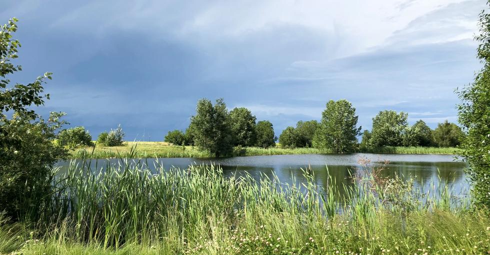 Pickel Pond