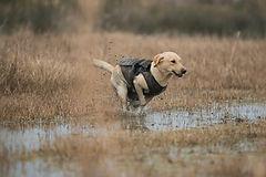Larador de chasse