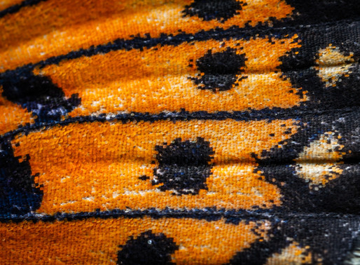 Le ali delle farfalle