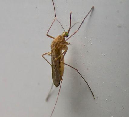 Un metodo naturale per eliminare le zanzare