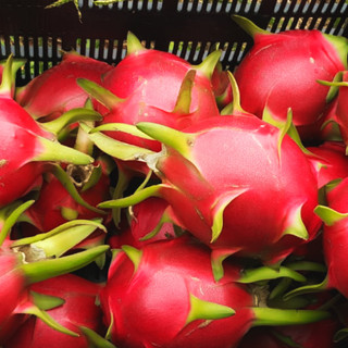 Dragon Fruit .jpg