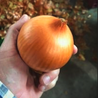 Brown onion.png