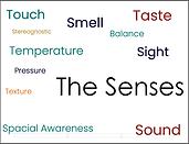 The Senses.png