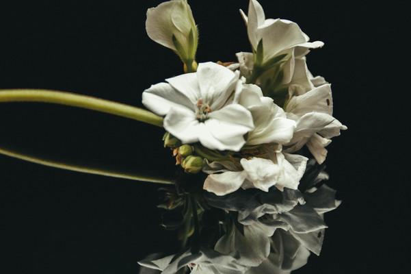 BlumenspiegelDSC_00062.jpg