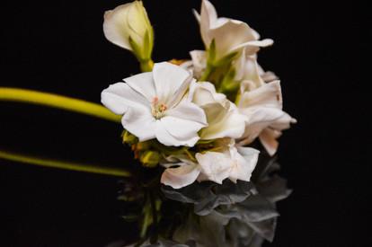BlumenspiegelDSC_00073.jpg