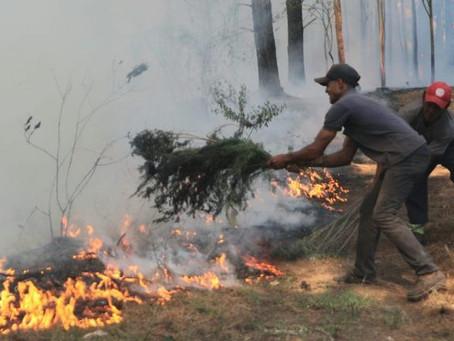 Metsul emite alerta de risco extremo de fogo em vegetação no RS