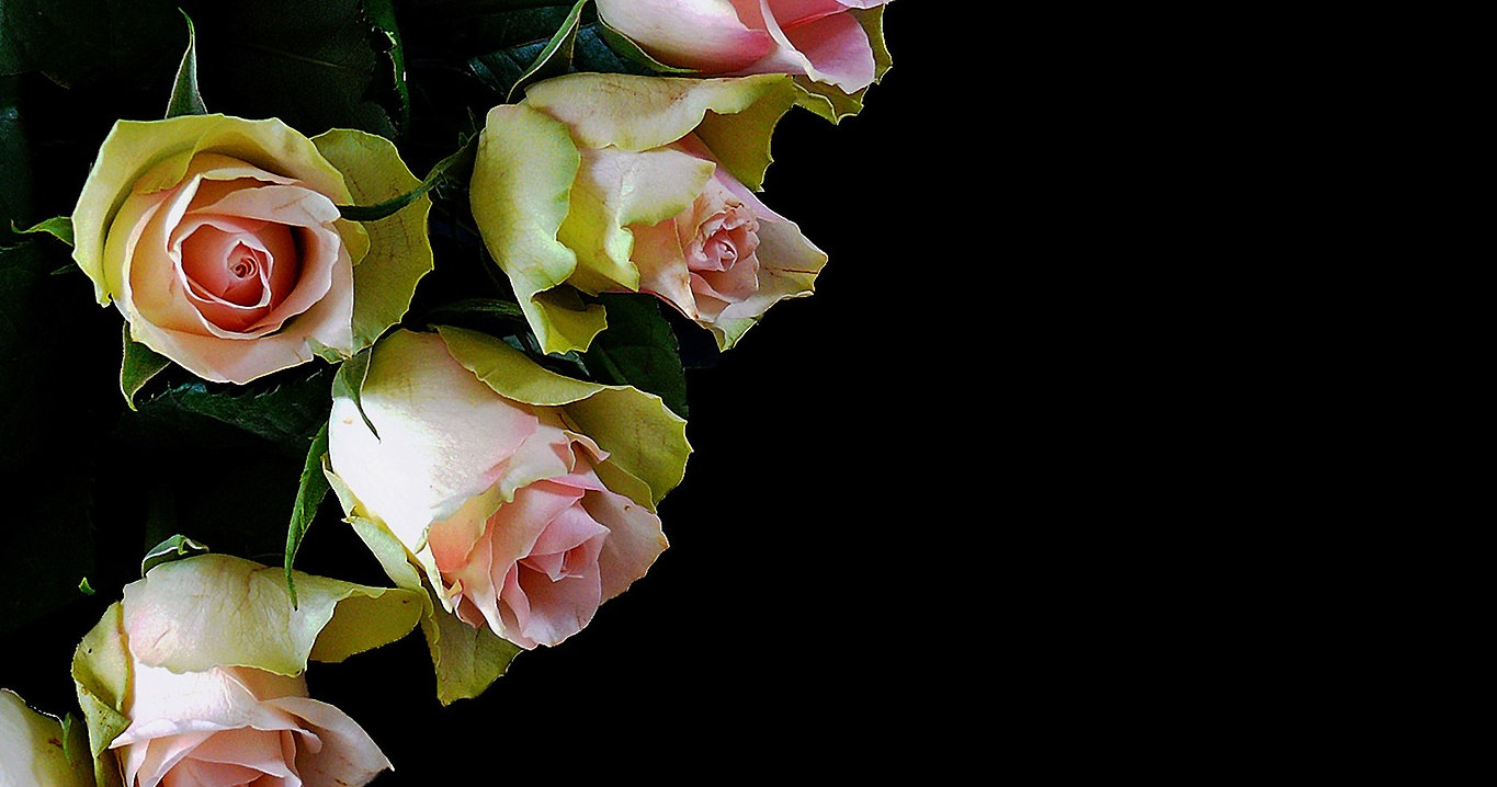 Close-up of pink roses on black background.