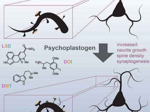 Psychédéliques – Plasticité neuronale