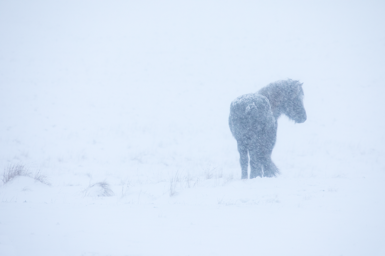 C34A9591_Iceland-horses_2.png