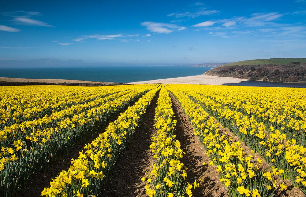 Cornish Springtime