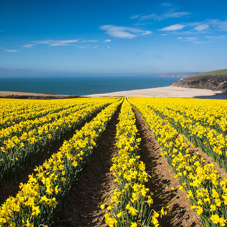 Spring in Cornwall