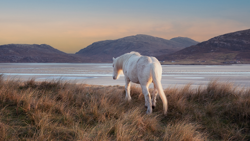 White Horses on the Isle of Harris, Outer Hebrides