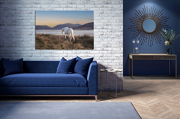 Equine printed image on a large wall by Carla Regler Photography