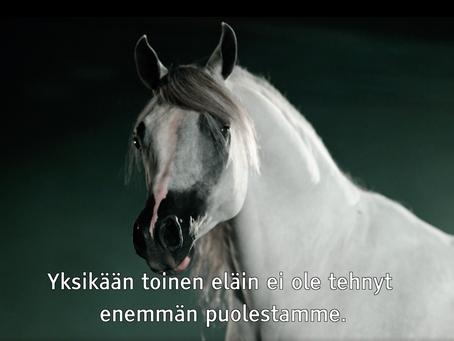 Hevonen elämän opettajana