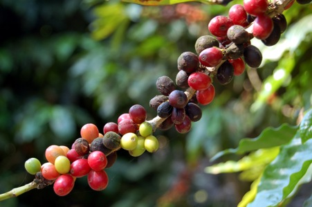Visit a coffee plantation
