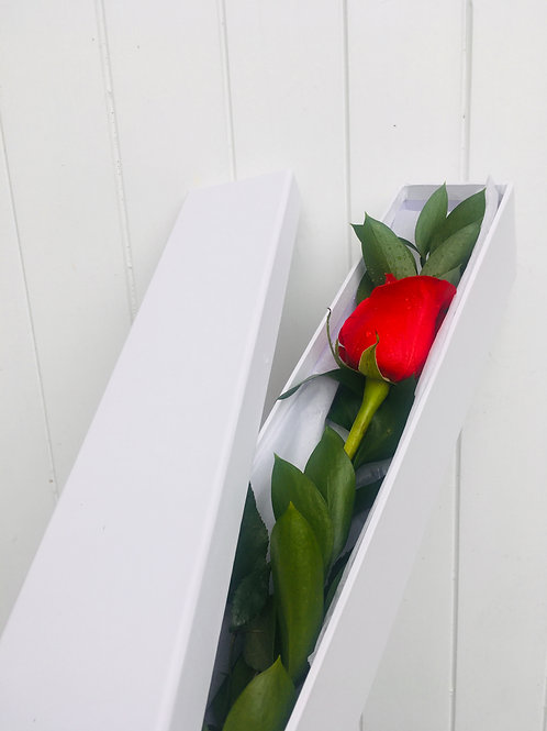 Single Red Rose (boxed)