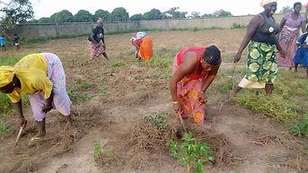 Cassava field working party 2019.jpeg