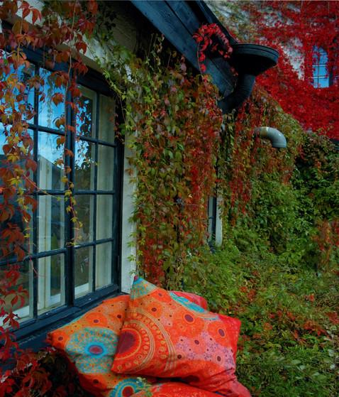 'Rainbow' bedding and vines