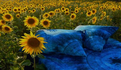 'Pond' bed in sunflower field