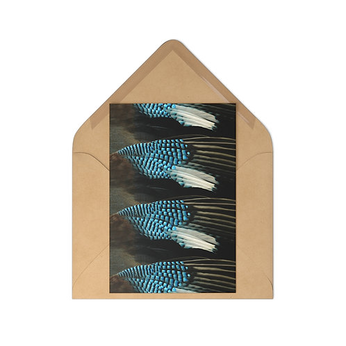 Blue Jay - Postcards (7 pcs)