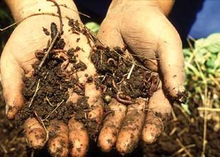 פעילות חקר אדמה, חול ואבנים