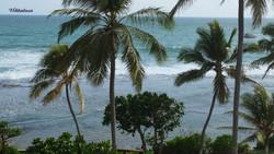 Sri Lanka-386