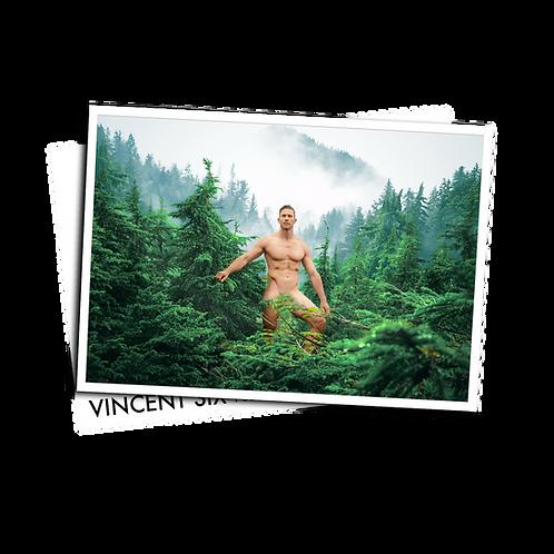 The Fog - Postcard