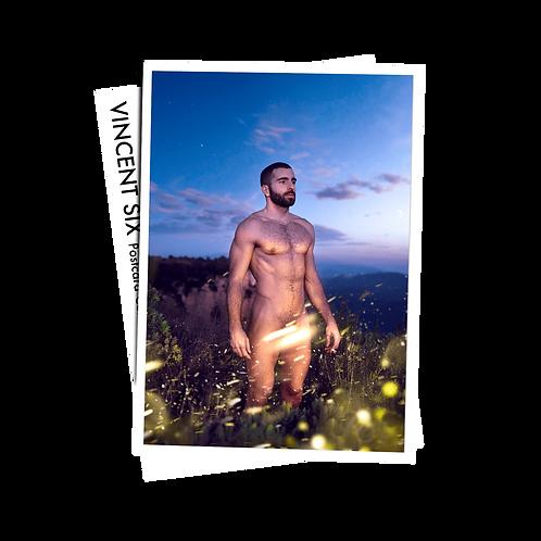Fireflies - Postcard