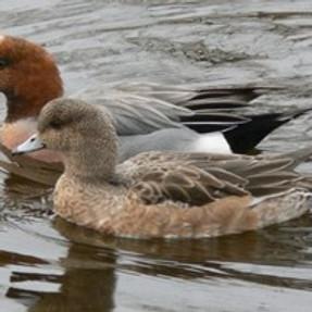Warm Springs WMA Bird Tours - June 26