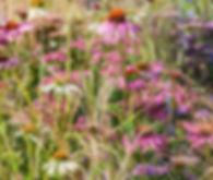 Equality Rising, RHS Tatton Park, 2017, Planting, Flowers