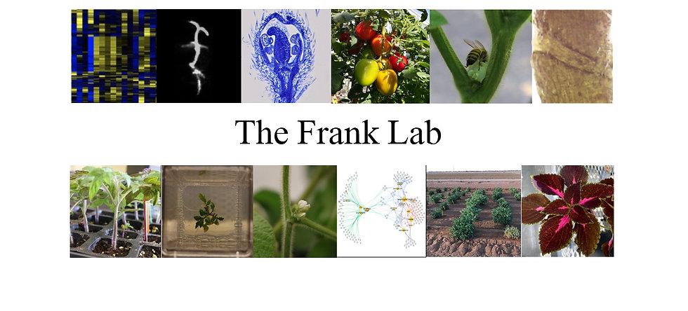 franklabheader_edited.jpg