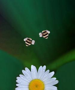 Steel Bee Earrings