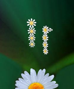 Falling Daisy Earrings