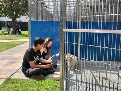Pet Literacy 2019