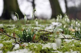Marzec w ogrodzie: regeneracja trawnika po zimie
