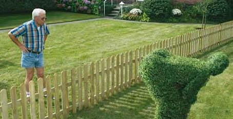 Marzec w ogrodzie: cięcie krzewów, formowanie żywopłotów, odmładzanie tui.